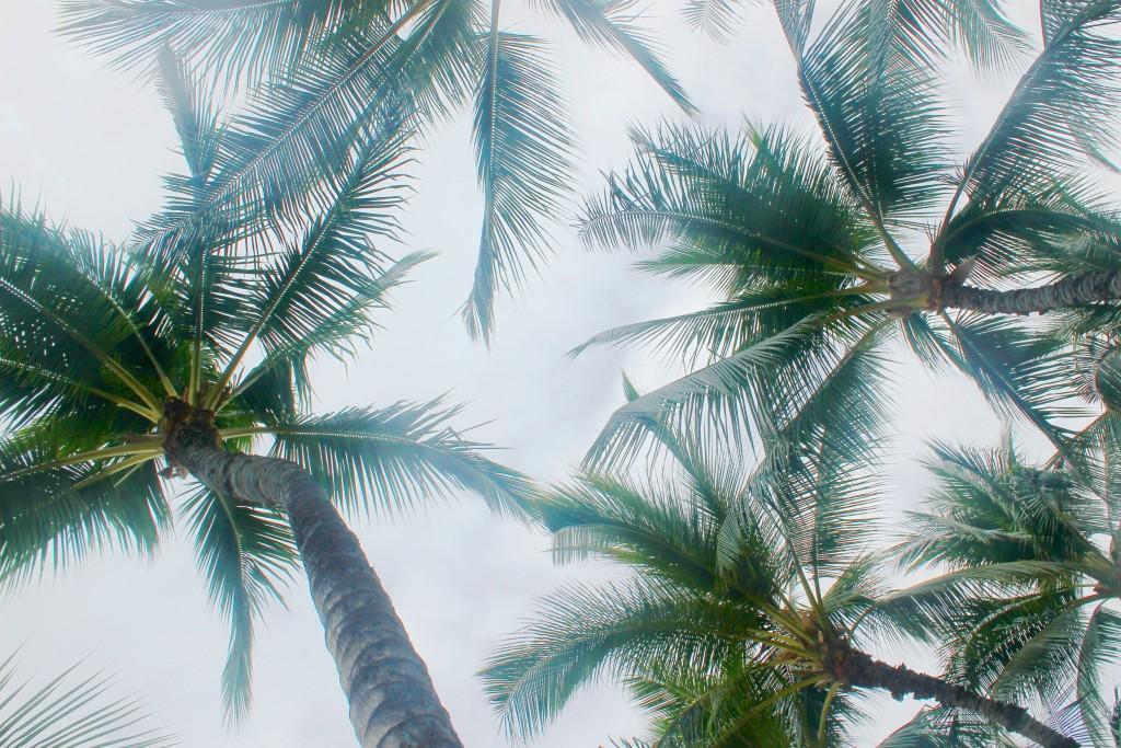 Aloha Vibes 11