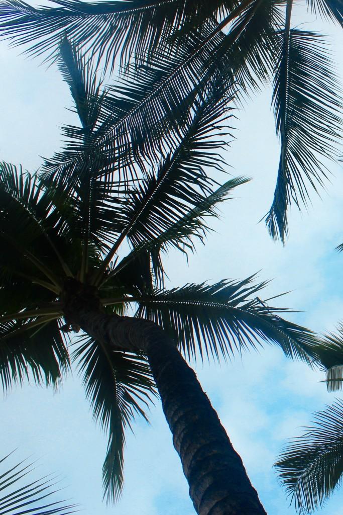 Aloha Vibes 5
